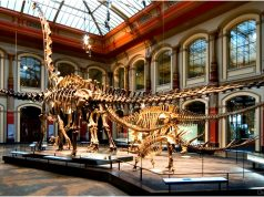 Dinosaur Museums in the World
