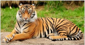 Wild Animals of India